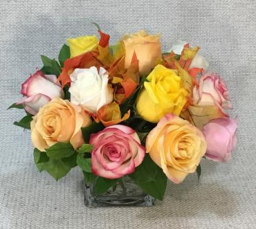 Fall Rose Special