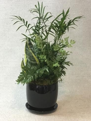 Black Ceramic Planter