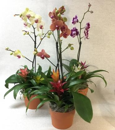 Orchid & Bromeliad Planter